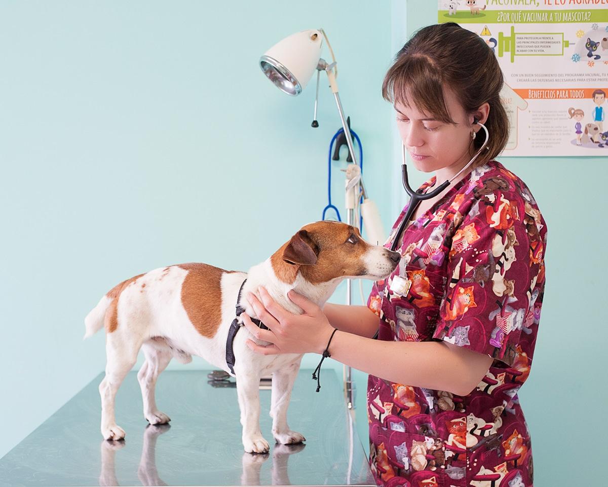 fotografia-sevilla-veterinaria
