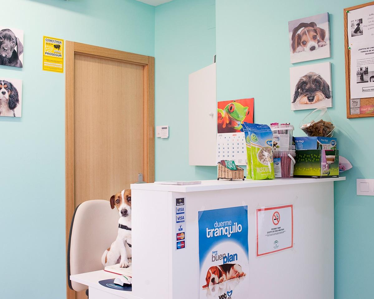 fotografia-sevilla-veterinario
